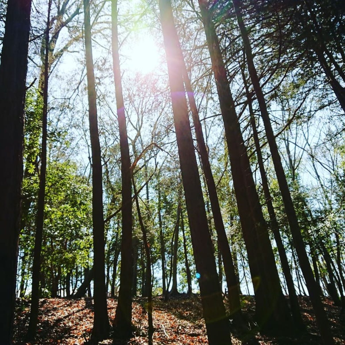 tuitelotokoのスピリチュアルブログ4